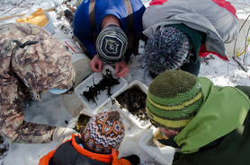 Winter Stonefly Search
